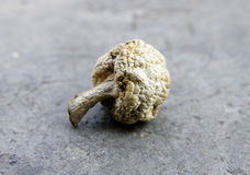 干蘑菇 免版税库存图片
