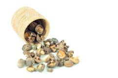 干蘑菇 免版税库存照片
