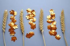 干被安排的麦子和金黄叶子 免版税图库摄影