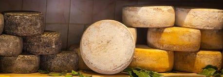 干酪不同的类型 免版税图库摄影