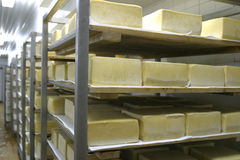 干酪牛奶店存贮 库存图片