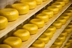 干酪荷兰语荷兰扁圆形干酪 图库摄影