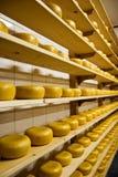 干酪荷兰语荷兰扁圆形干酪 库存图片