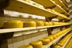 干酪荷兰语荷兰扁圆形干酪 库存照片