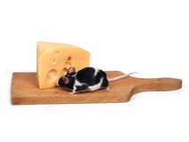 干酪鼠标 免版税图库摄影