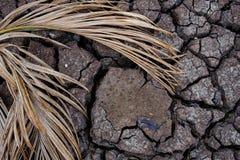 干陆,世界灾害,破裂的地面背景 库存照片