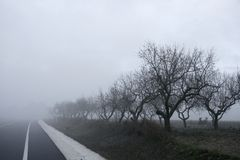干雾结构树消失冬天 库存照片