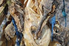 干鱼在冰岛 免版税库存照片