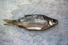 干鱼在桌河鱼说谎 免版税图库摄影