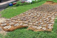 干鱼在Hikkaduwa,斯里兰卡 库存照片