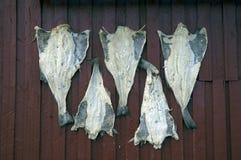 干鱼墙壁 图库摄影