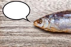干鱼谈话 库存照片