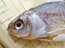 干鱼 图库摄影