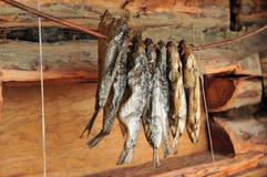 干鱼 免版税图库摄影