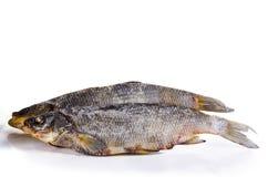 干鱼4 图库摄影