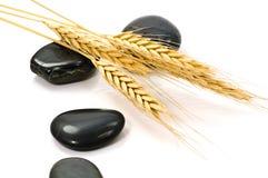 干黑麦石头 库存图片