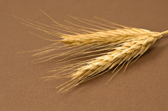 干黑麦 库存照片