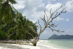 干结构树 免版税库存图片