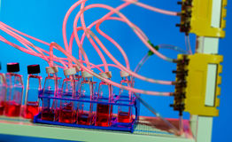 干细胞耕种扩散的Microfluidic设备 图库摄影