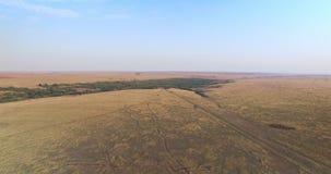 平原地形,草甸鸟瞰图在乌克兰 股票录像