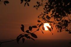 平原的橙色日落从Bakheng Wat的与树剪影在前景离开 图库摄影