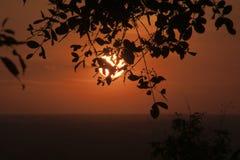 平原的橙色日落从Bakheng Wat的与树剪影在前景离开 免版税库存图片