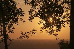 平原的黄色日落从Bakheng Wat的与树剪影在前景离开 免版税图库摄影
