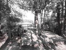 平台在森林 库存图片