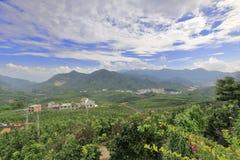 平和县柚子森林  库存照片
