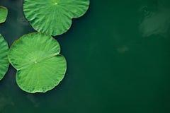平安和镇静概念 绿色莲花叶子的构成 免版税库存图片