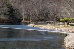 平安地坐由一个冻湖的母亲 免版税库存图片