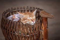 平安地睡觉在柳条筐葡萄酒的美丽的红色猫手工制造 特写镜头 图库摄影