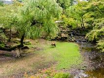 平安日本的庭院 免版税库存照片