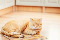 平安橙红虎斑猫男性小猫睡觉 免版税库存照片