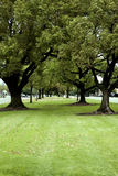 平安的公园 库存照片