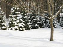平安的场面雪 免版税库存照片