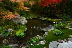 平安的日本鱼池在与显示他们的秋天颜色的美丽的槭树的秋天 图库摄影