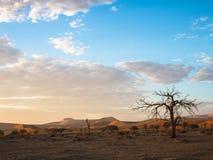 平安的早晨日出看法与美好的死的树和沙漠沙丘浩大的天际的与软的蓝天和白色云彩 库存照片