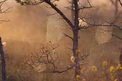 平安的有雾的早晨在森林里 免版税库存图片