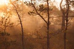 平安的有雾的早晨在森林里 免版税库存照片