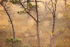 平安的有雾的早晨在森林里 库存照片