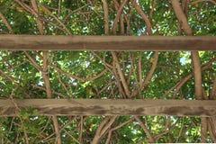 平安的树荫在Ojai,加利福尼亚公园 库存图片