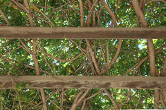 平安的树荫在Ojai,加利福尼亚公园 免版税图库摄影
