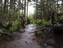 平安的森林山行迹 库存照片