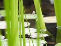 平安的池塘生活 免版税库存图片