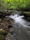 平安的河岸小瀑布 免版税库存图片