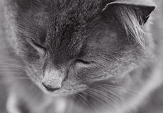 平安的猫 库存照片