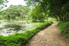 平安的自然池塘在森林里 免版税库存照片