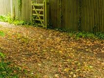 平安的道路在秋季森林或公园里 库存图片