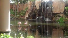 平安的Koi池塘 免版税库存照片